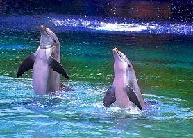 海豚水上世界