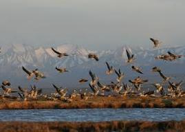 盐池湾自然保护区
