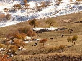 察汗淖尔草原度假村