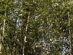 佳木斯西浦森林公園