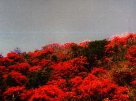 燕子山国家森林公园