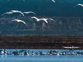 白天鹅湿地自然保护区