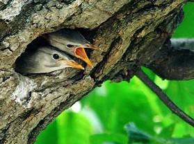 董寨国家级自然保护区