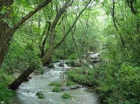 大口国家森林公园