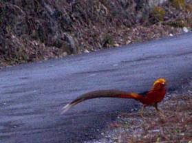 后河國家級自然保護區