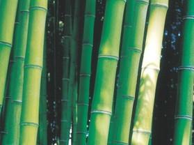 桃江──竹子之乡