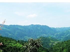 鹿步溪省级原始次森林保护区
