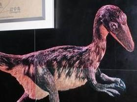 中华龙鸟化石