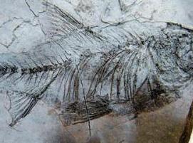 古脊椎动物群化石遗址