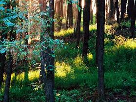 药乡国家森林公园