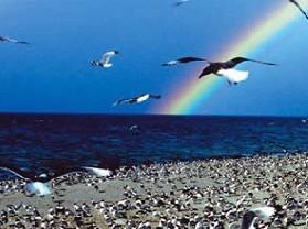 青海湖鸟岛