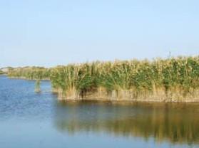 甘家湖白梭梭自然保护区