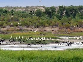 艾比湖湿地自然保护区