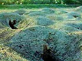 焉不拉克古墓群